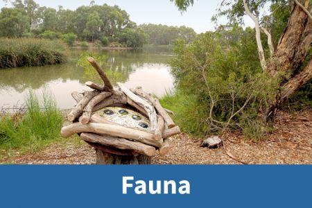 Fauna Icon