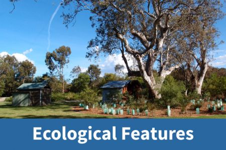 Ecological Features Icon