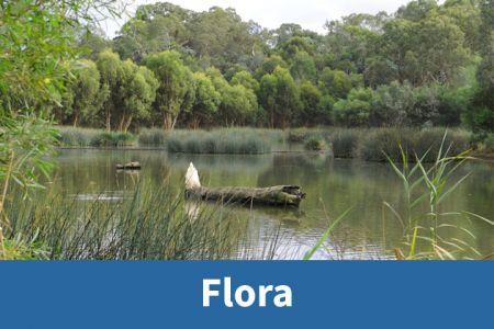 Wetlands Flora